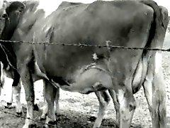 Bertha 1950's Sweet Farmers Daughter